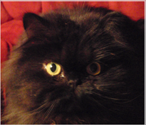 NOIR KITTY MEWS - Mewsings of Valentine the Persian Cat