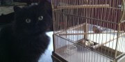 Valentine the Cat with Birdcage