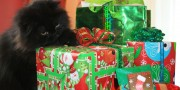 Valentine the Cat Gifts