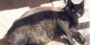 Arwen Cat sunbathing