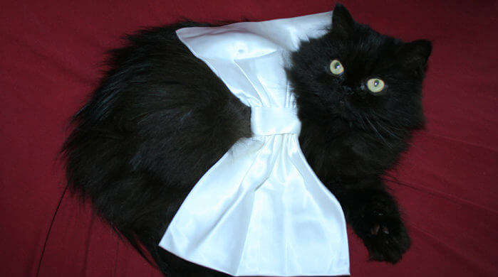 Val with satin bow