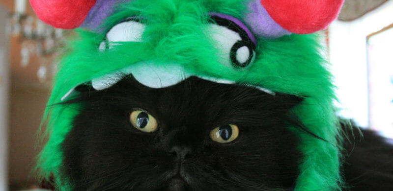Green monster kitty