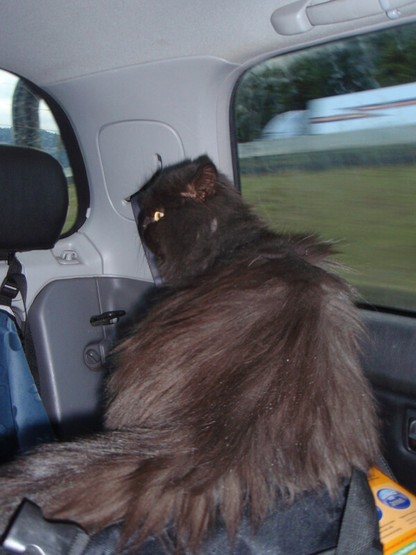 Me on drive to my Forever Home