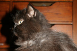 A Cat's Television Access Woes