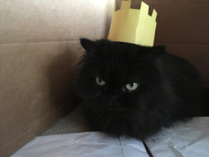 Valentine Cat in Crown Hat