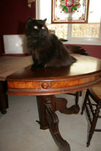 Valentine Cat on Old Table