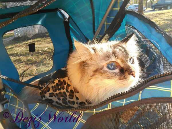Dezi Service Kitty in Stroller