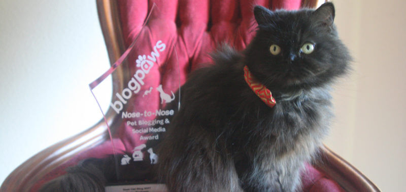 Valentine Cat with Best Cat Blog Award