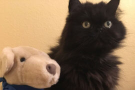 Cat Prefers Plush Toy Dog Over the Real Thing