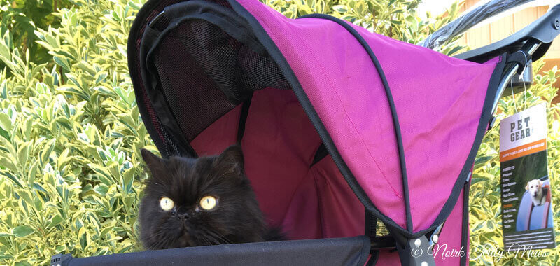 Cat in Happy Trails Lite No Zip Pet Stroller