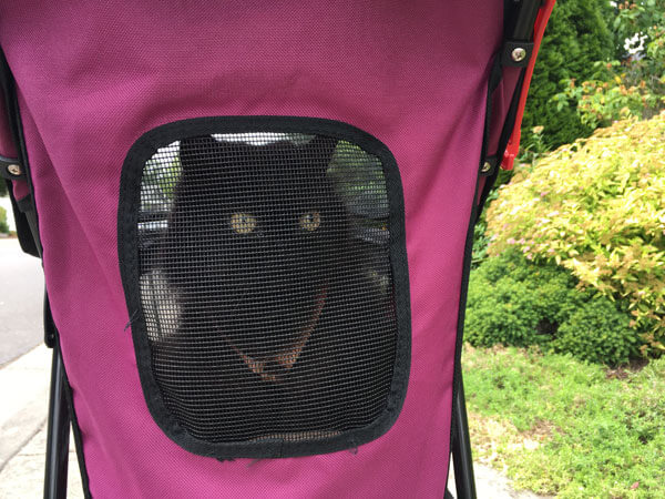 Cat in Window of Happy Trails Lite No Zip Pet Stroller