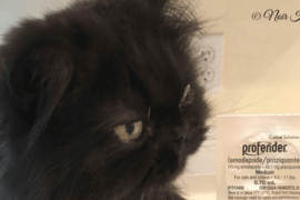 I Was Treated!: Review of Profender Cat Dewormer & Application How Tos