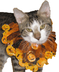 Pampered Whiskers Pumpkinhead Kitty Collar