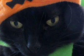 All Hallows Eve Top Trickster Kitties!