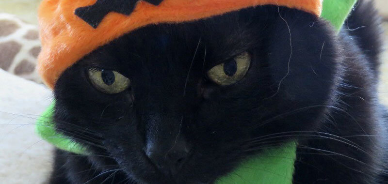 Trickster Ernie Cat in Hat Closeup
