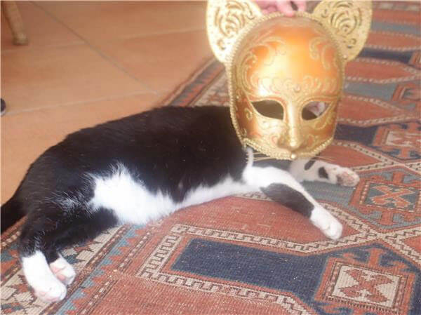 Trickster Loulou Cat in Gold Mask