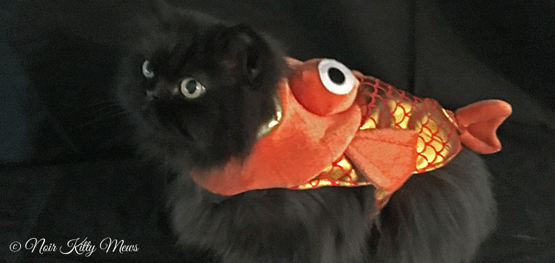 Valentine Cat Swallowed Up by Goldfish