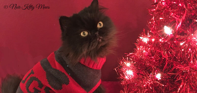 Valentine Cat is Sweatered for Christmas