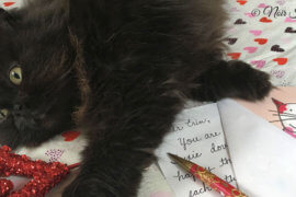 Valentine the Cat Announces 2nd Annual Love Letter Contest