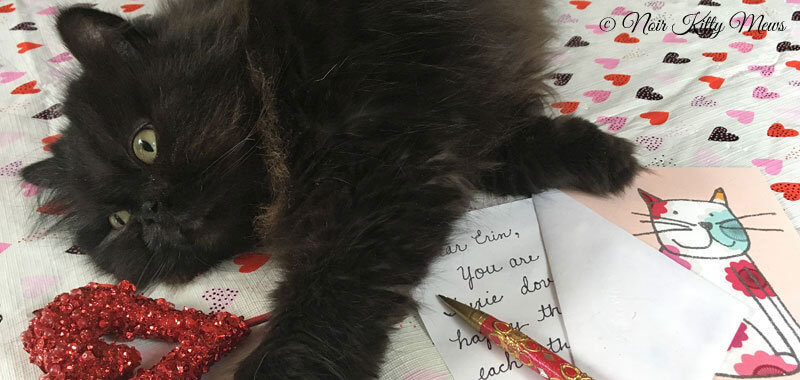 Valentine Cat Announces His Love Letter Contest