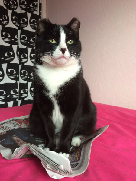 Erin the Cat Princess Sits on Newspaper